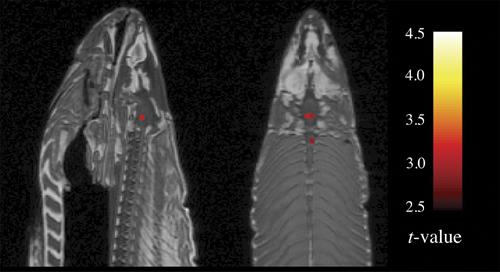 bennett-salmon-figure1